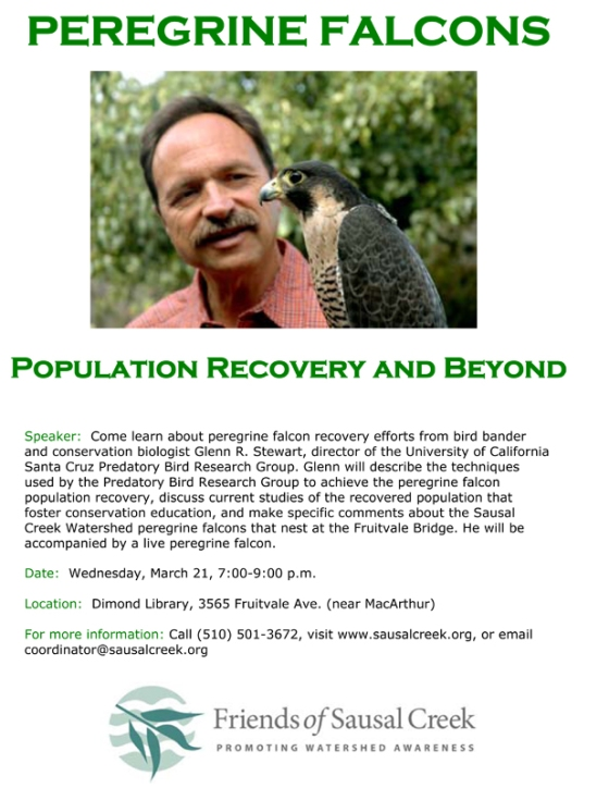 Peregrine Falcons Population Recovery